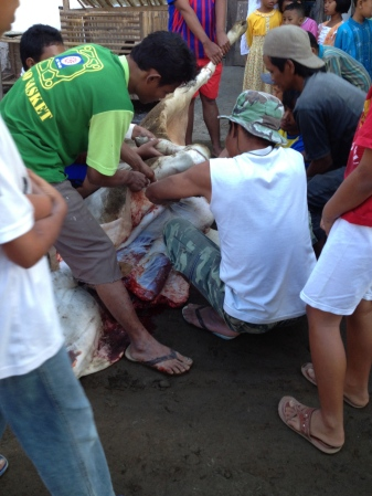 Men crowding around the cow during the skinning process